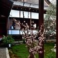 Photos: 2020_0223_141824 中庭