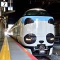Photos: 2020_0224_114954 パンダくろしお