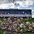Photos: 2020_0329_154534_01 桜咲く