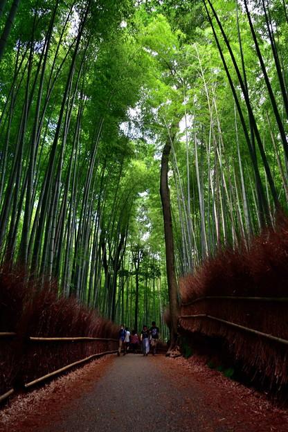 2020_0628_151515 竹林の小径