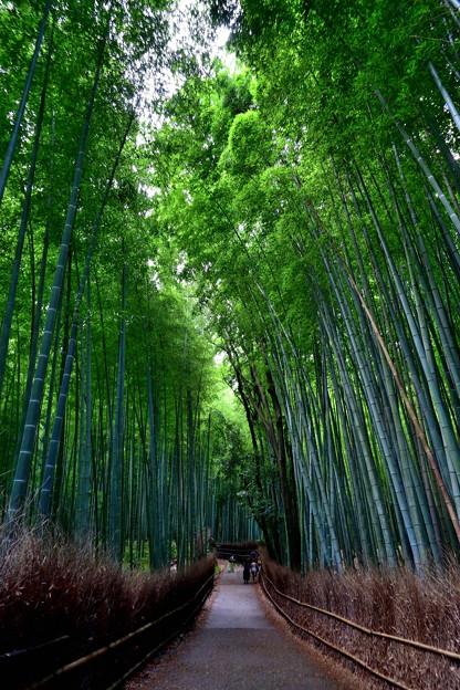 2020_0628_150959 竹林の小径