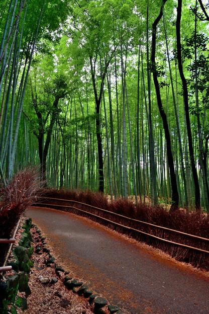 2020_0628_151137 竹林の小径