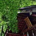 2020_0628_150029 野宮神社