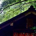 2020_0628_145937 野宮神社