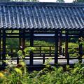 2020_0809_155800 通天橋と臥雲橋