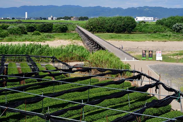 2020_0812_140647 碾茶とながれ橋