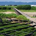 Photos: 2020_0812_140647 碾茶とながれ橋