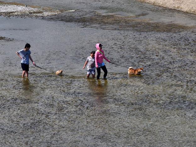 2020_0812_141314 わんちゃんも水遊び