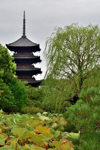 2020_1010_162859 東風柳と五重塔