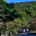 Photos: 2020_1025_154725 京の東山