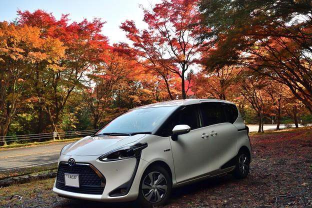 2020_1108_130720 比叡山ドライブウェイ