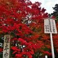 Photos: 2020_1108_152003 根本中堂