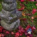Photos: 2020_1108_152545 お詣り中のトトロ