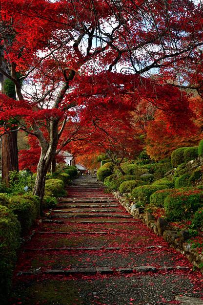 Photos: 2020_1121_125653 善峯寺