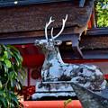 Photos: 2020_1121_143543 大原野神社