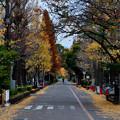 Photos: 2020_1122_163933_01 京大農学部