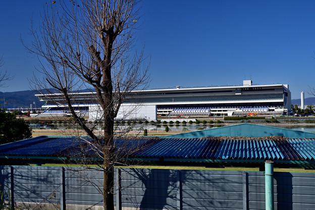 2020_1206_122612 京都競馬場