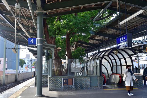 Photos: 2020_1226_125957 萱島の木