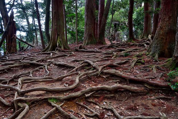 2021_0207_135959 木の根道