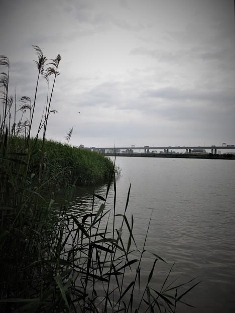 荒川放水路
