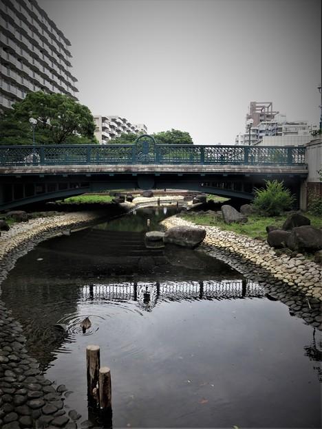 仙台堀川公園に