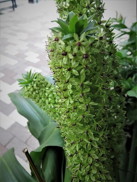 この花は?