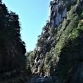 Photos: 岩に松