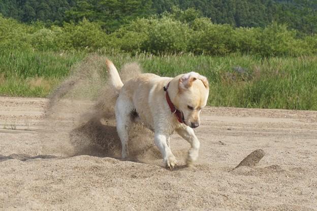 穴掘りわんこ