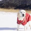 Photos: 雪の川原で