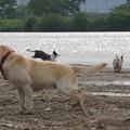 Photos: 河原犬
