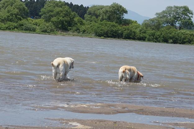 濁った川で