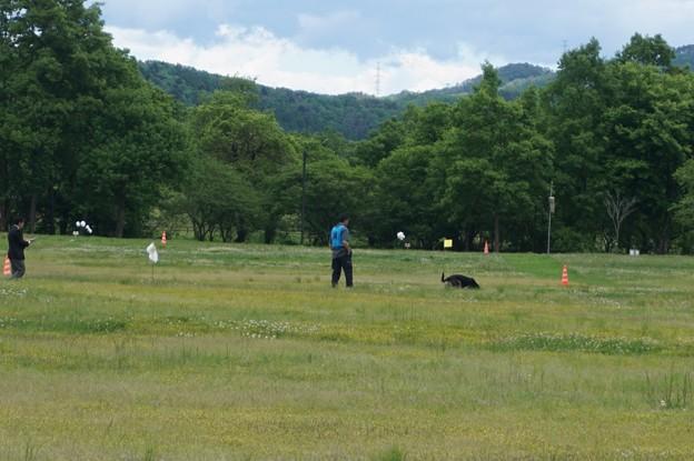 警察犬の訓練大会