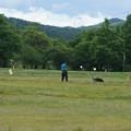 Photos: 警察犬の訓練大会