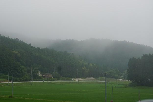 霧が流れる