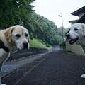 Photos: 夕散歩