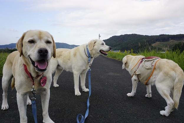 Photos: 親子で散歩