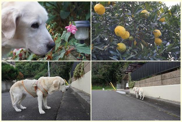 くん子の朝散歩