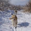 Photos: 雪 真っさら