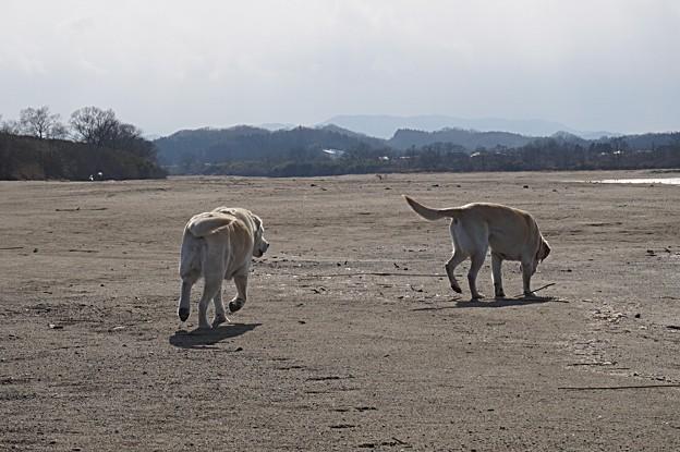 Photos: 強風中