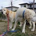 Photos: 午後散歩