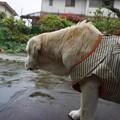 Photos: 雨ですが