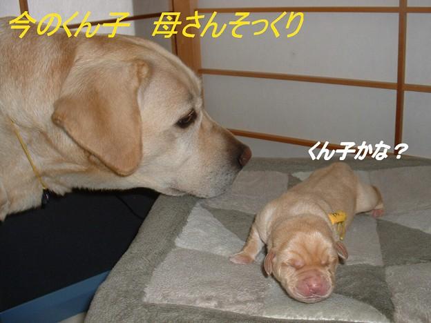 くん子と母さん