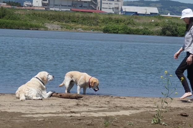 川原で遊ぼう