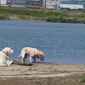 Photos: 川原で遊ぼう