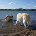 Photos: 水もひんやり