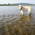 Photos: 川は楽しい