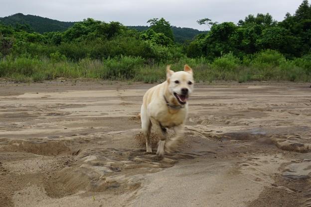 Photos: 川原で遊ぶ