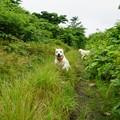 Photos: 小雨の散歩