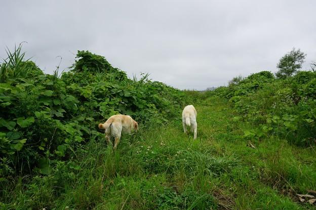 小雨の散歩