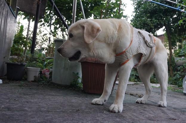 Photos: 母犬くん子